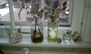 Windowsill Garden 1