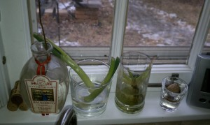 Windowsill Garden 2