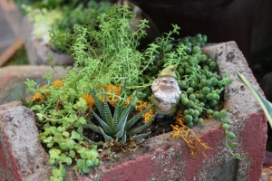Gnome Succulent Garden II